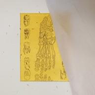 leg bones etching by Tiina Lilja