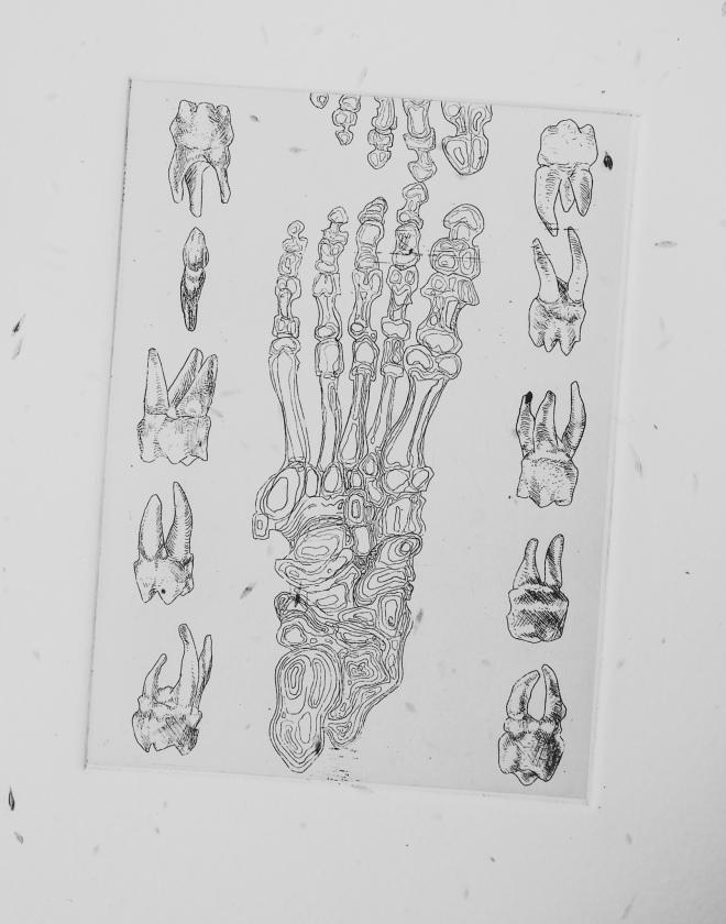 human leg bones etching by Tiina Lilja